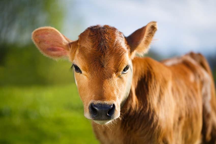 Tiere leiden unter Elektrosmog