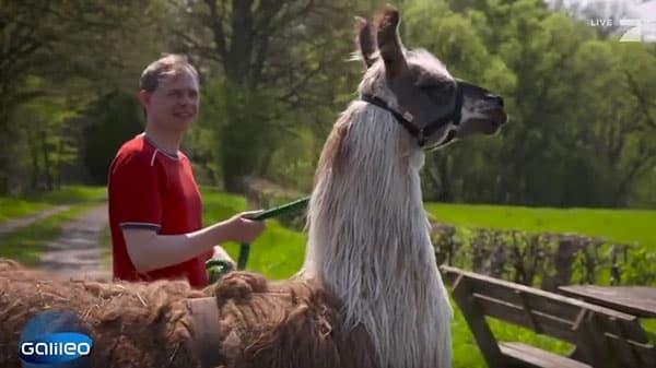 Ulrich Weiner und das Lama