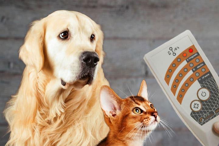Elektrosmogmessung von Tieren (Hund und Katze)
