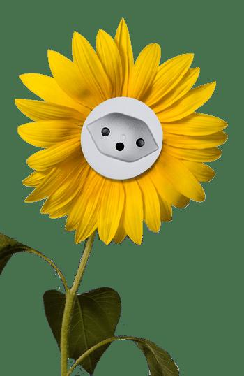Elektromagnetismus und Blume